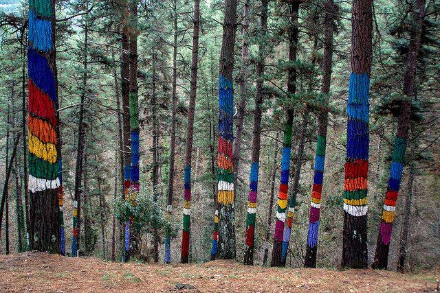 Bosque de Oma - Qué visitar en el País Vasco