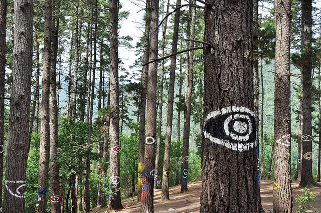 Detalle del Bosque de Oma - Qué visitar en el País Vasc