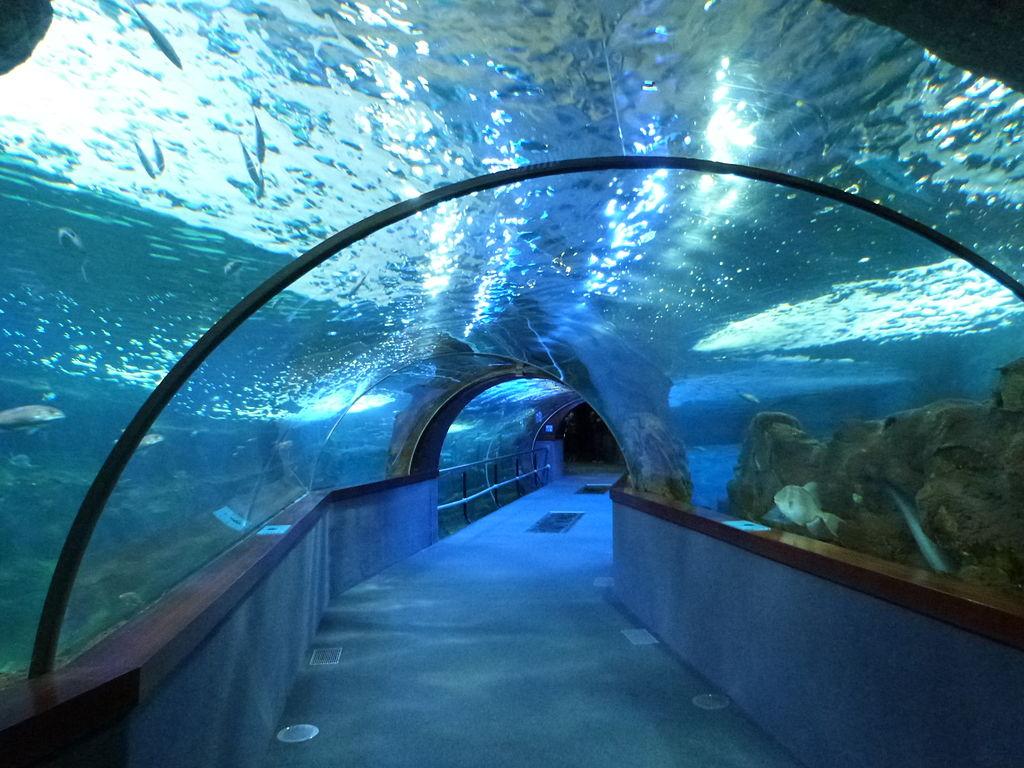 Aquarium de San Sebastián (Guipúzcoa) - Hotel en el País Vasco