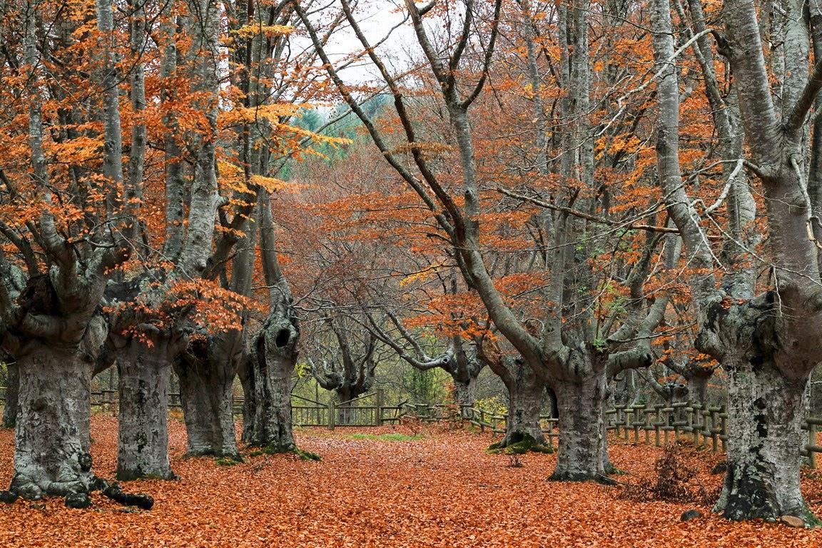 Hayedo en Altube - Qué visitar en el País Vasco