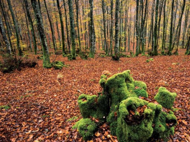 Hayedo de Altube (Álava) - Qué visitar en el País Vasco