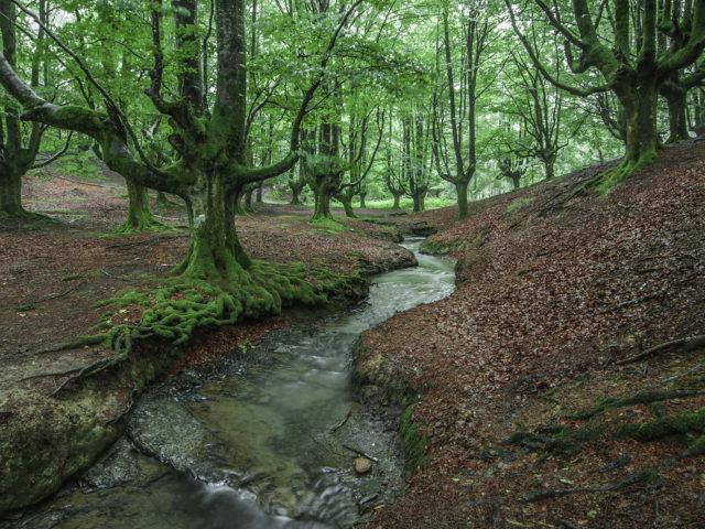 Hayedo de Otzarreta, un bosque de ensueño en el Gorbea